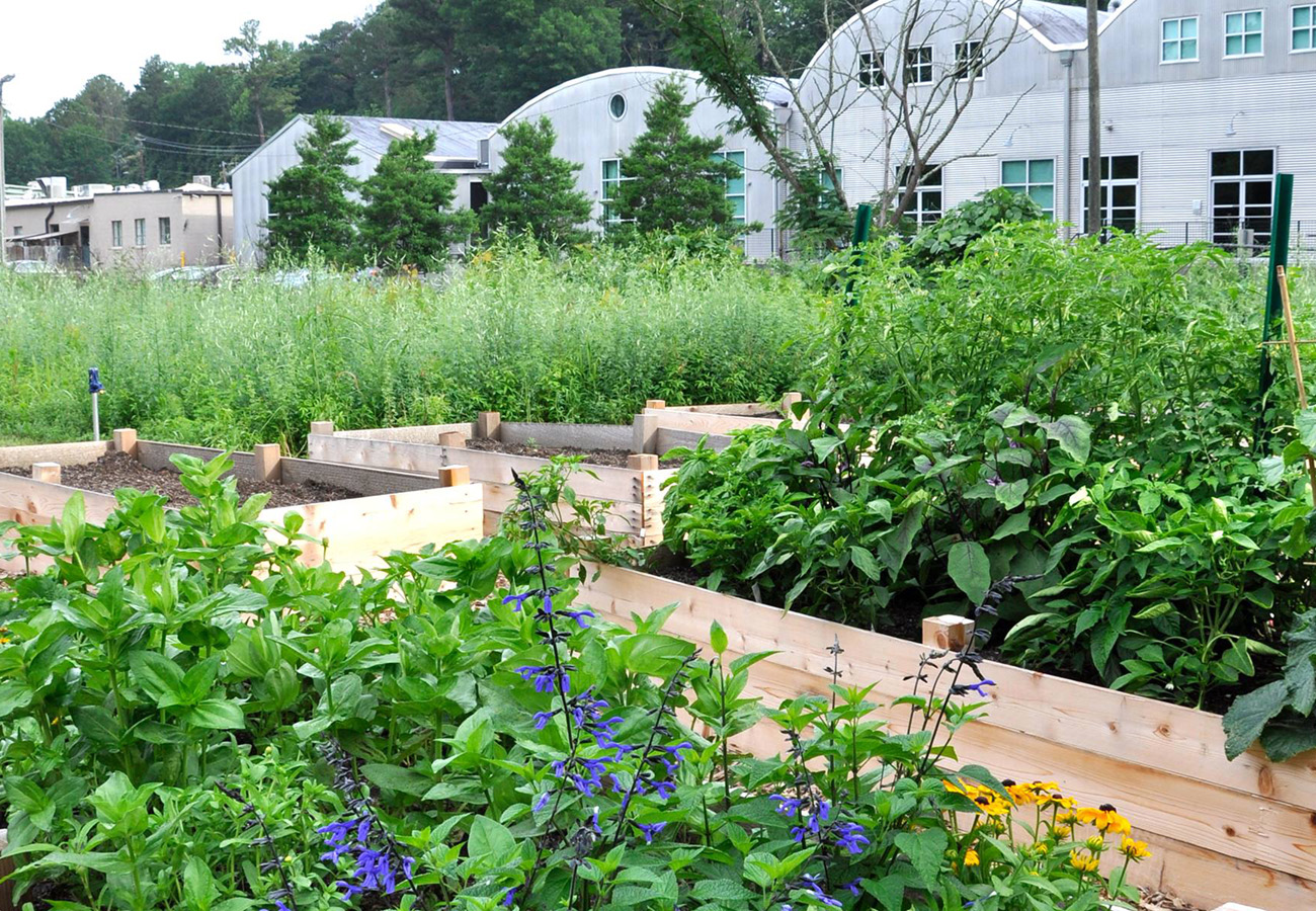 Nickel Bottom Community Garden › Community Garden
